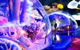 Children Are Discovering the Magical Underwater World